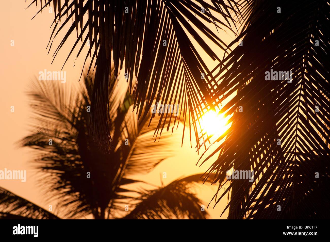 Sonnenuntergang mit Kokosnuss-Palmen, Hawa Strand, Kovalam, Kerala, Indien Stockbild