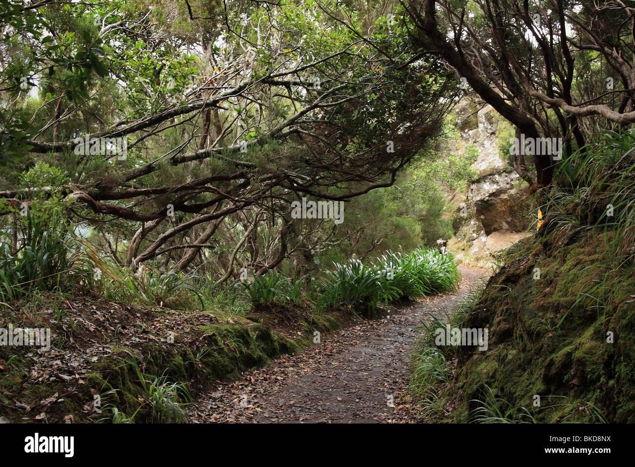Lorbeerwald auf Madeira Stockbild