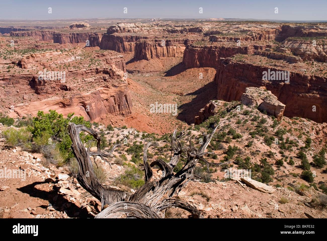 Canyon-Nationalpark, Utah, Vereinigte Staaten von Amerika; Eine Schlucht auf der Insel im Bezirk Himmel Stockbild