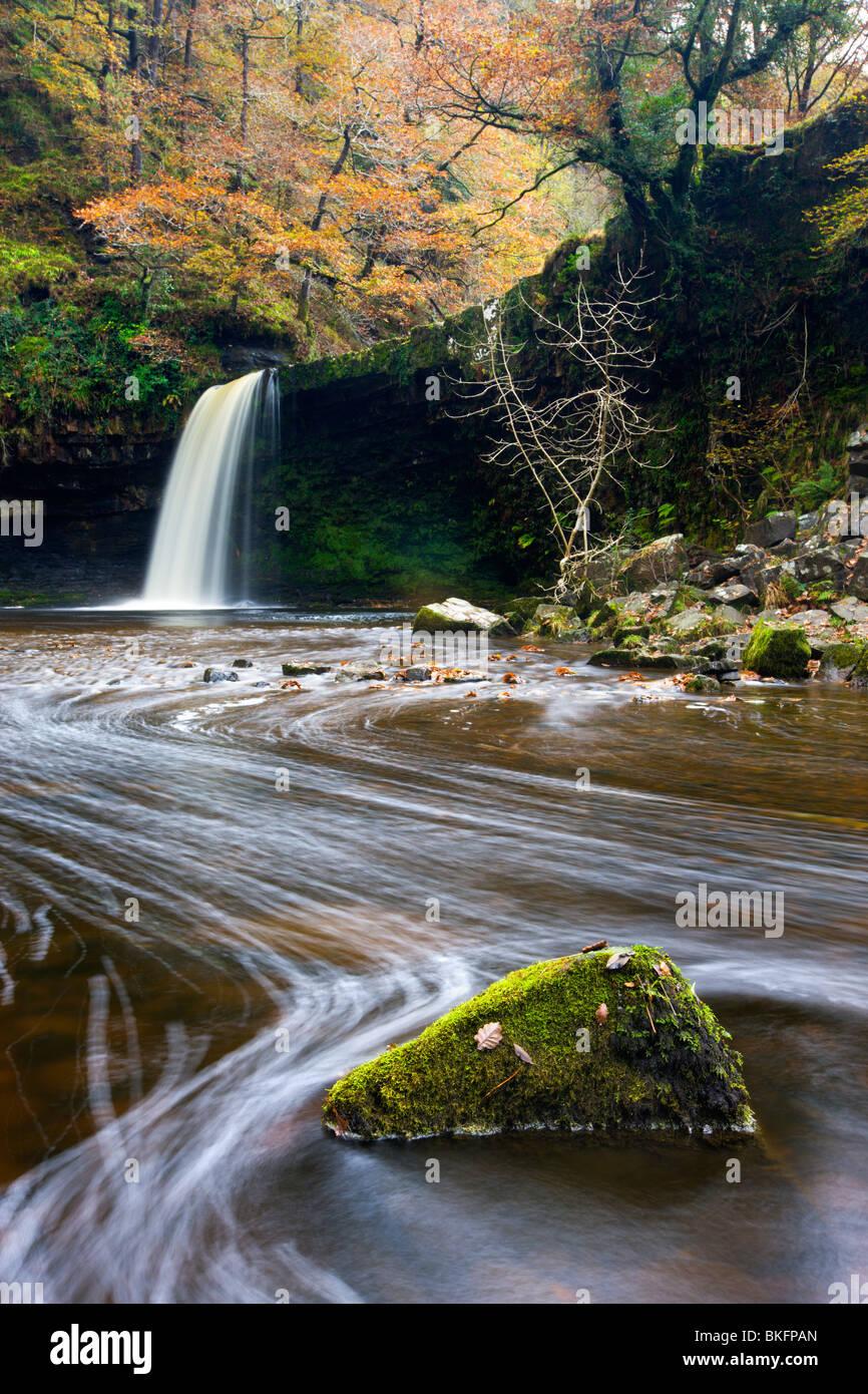 Sgwd Gwladus Wasserfall umgeben von herbstlichen Laub, in der Nähe von Ystradfellte, Brecon Beacons National Stockbild