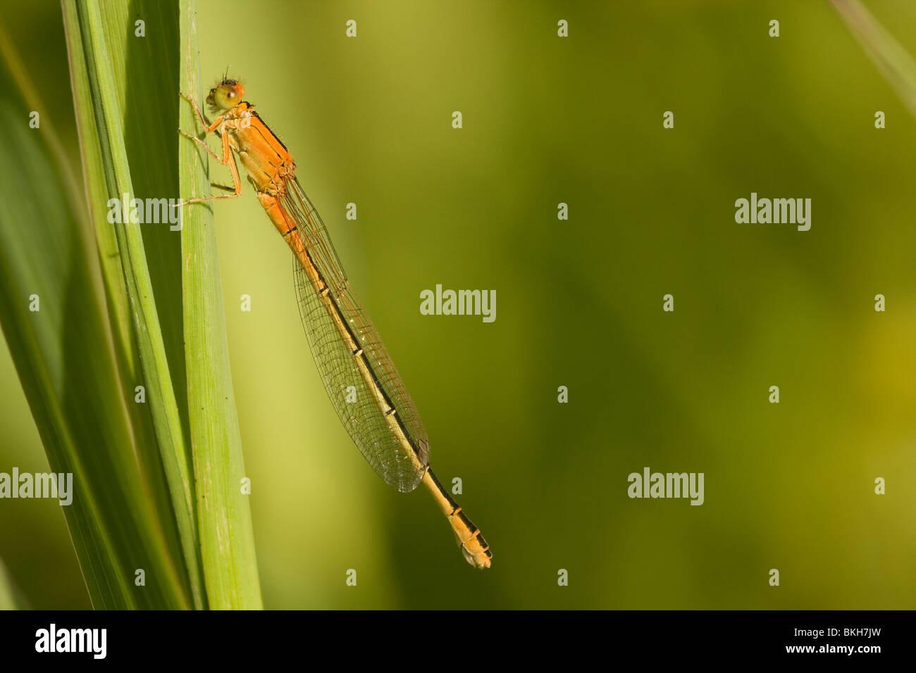 Orange Morph Stockfotos & Orange Morph Bilder - Alamy