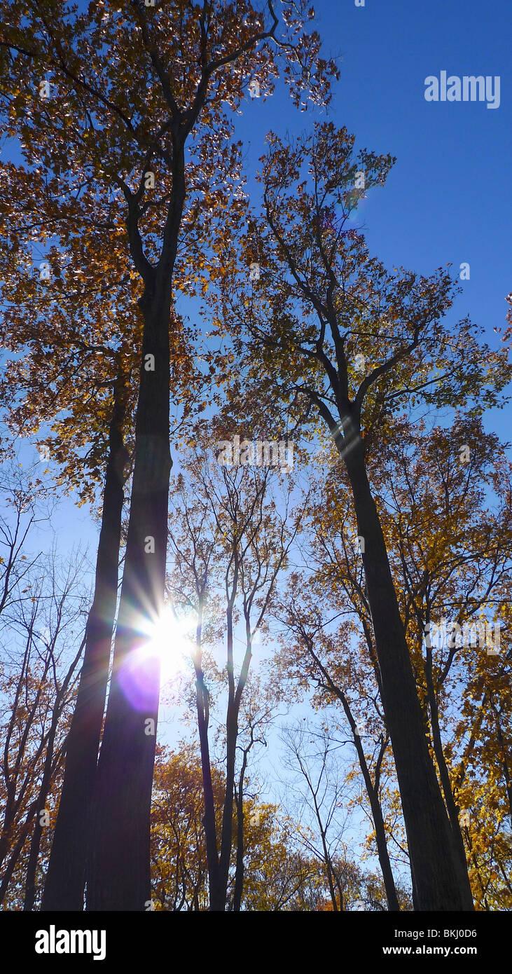 Inspirierende Sunburst durchschimmern Ruhe Herbstlaub. Sonnenstrahl durch Bäume. Stockbild
