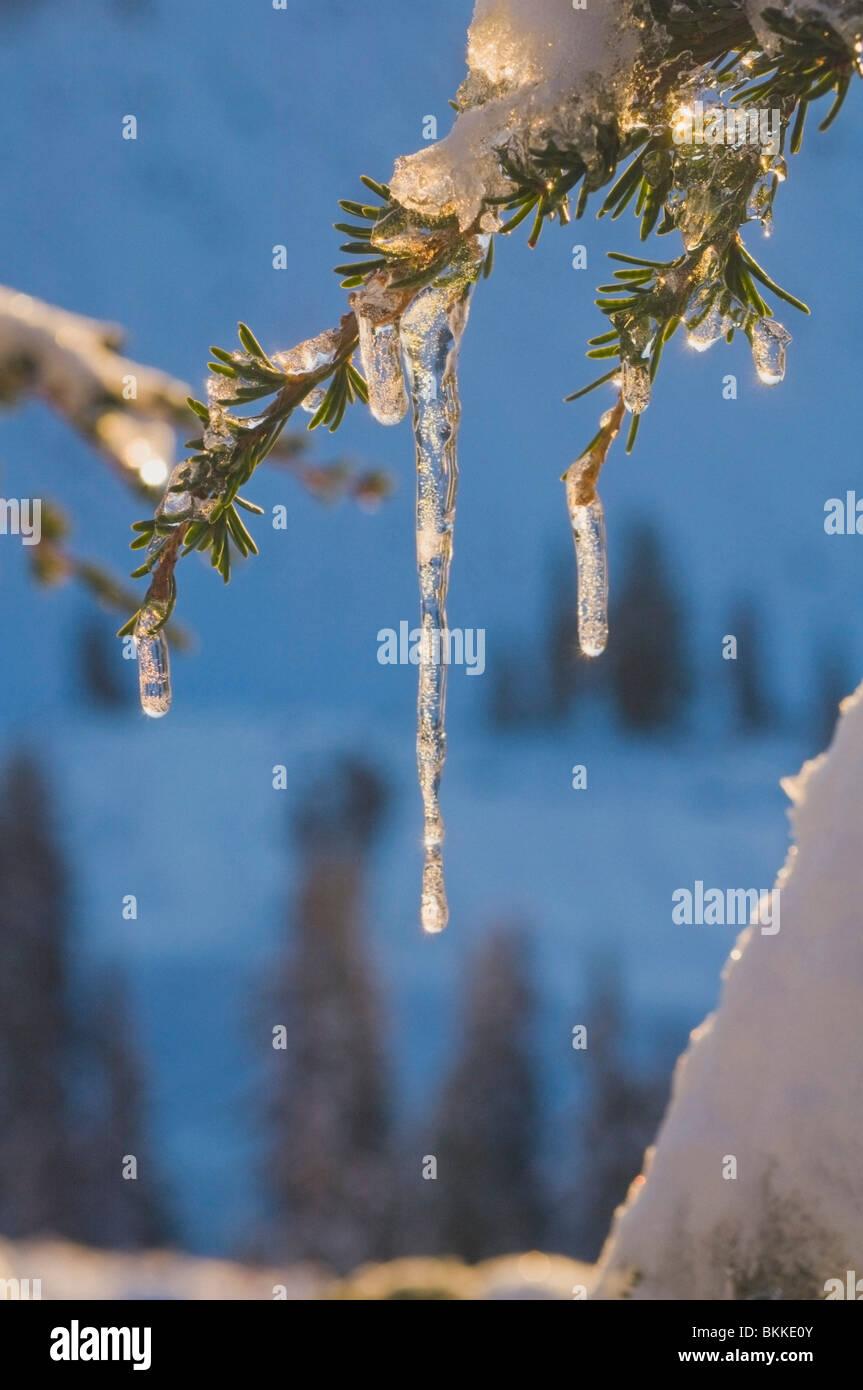 Oregon, Vereinigte Staaten von Amerika; Eiszapfen auf einem Ast In Mount Hood National Forest Stockbild