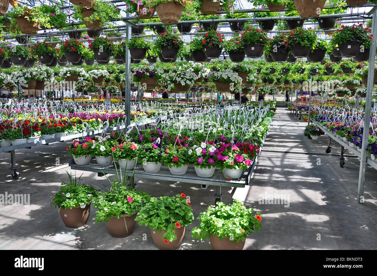 blumen und pflanzen zum verkauf an einen garten shop im fr hjahr bradford gew chshaus ontario. Black Bedroom Furniture Sets. Home Design Ideas