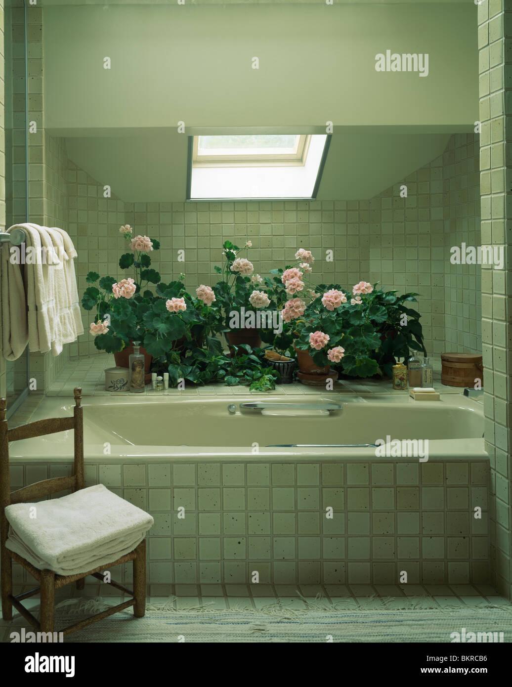 Töpfe mit rosa Rosen hinter Bad modern grau gefliest Dachgeschoss ...