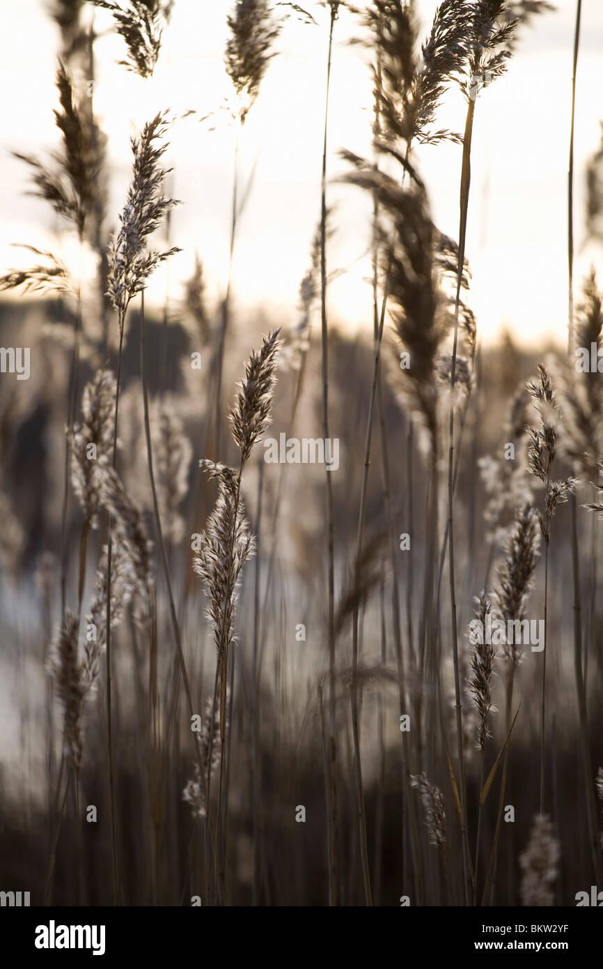 Rasen auf Feld Stockbild