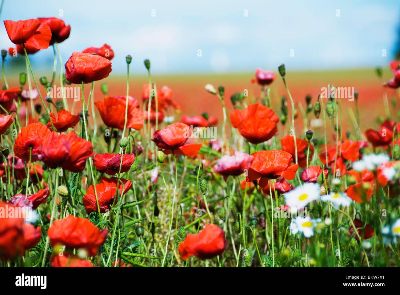 Eine Menge von Blumen Stockbild