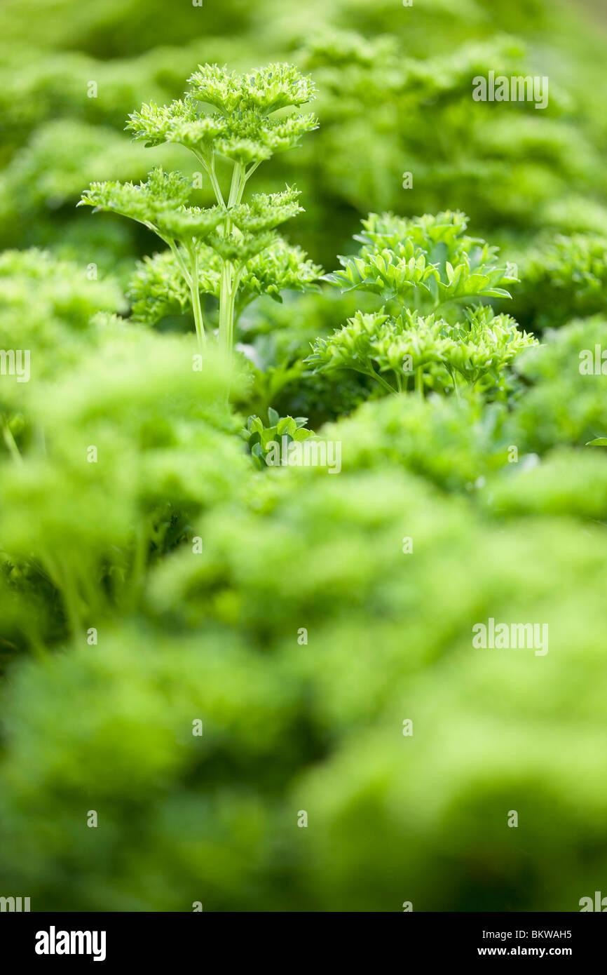 Grünen Ozean von vegetation Stockbild