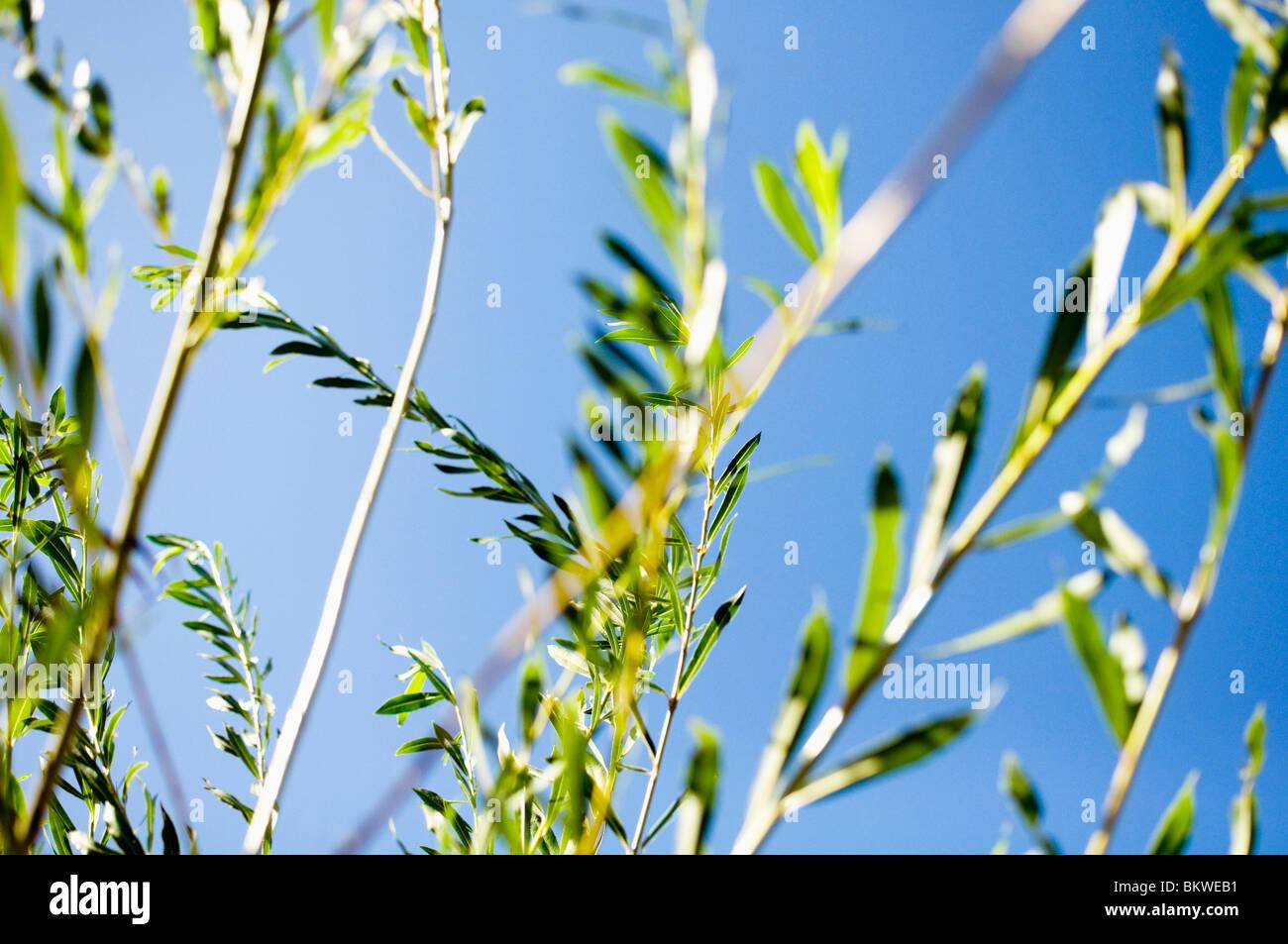 Closeup auf die vegetation Stockbild