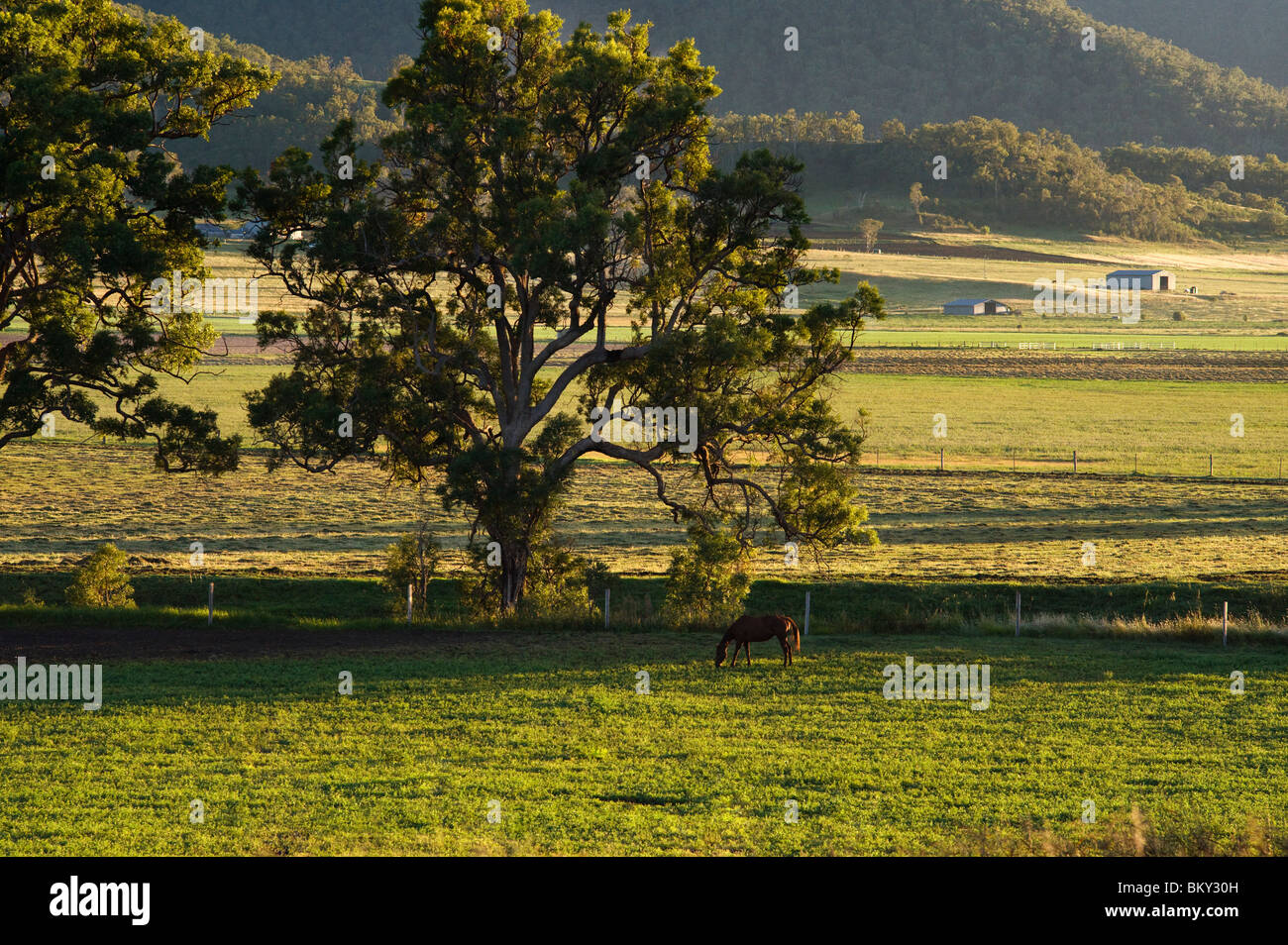 Farmland - Darling Downs Stockbild