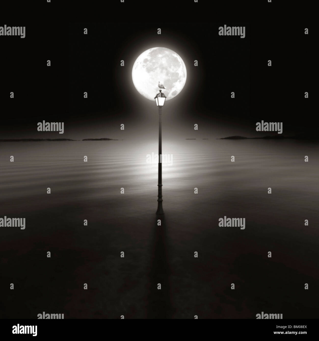 Eine Möwe sitzt oben auf einen Laternenpfahl in der Nacht vom Mond Silhouette Stockbild