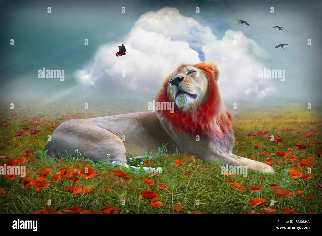 Löwen in einem Mohnfeld mit Schmetterling Stockbild