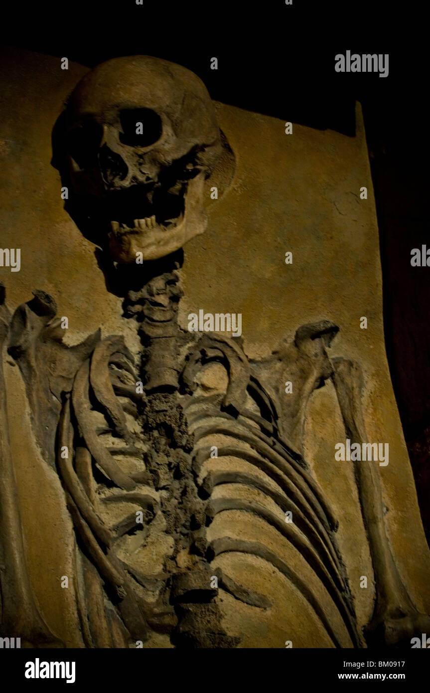 Charmant Interaktives Menschliches Skelett Galerie - Physiologie Von ...