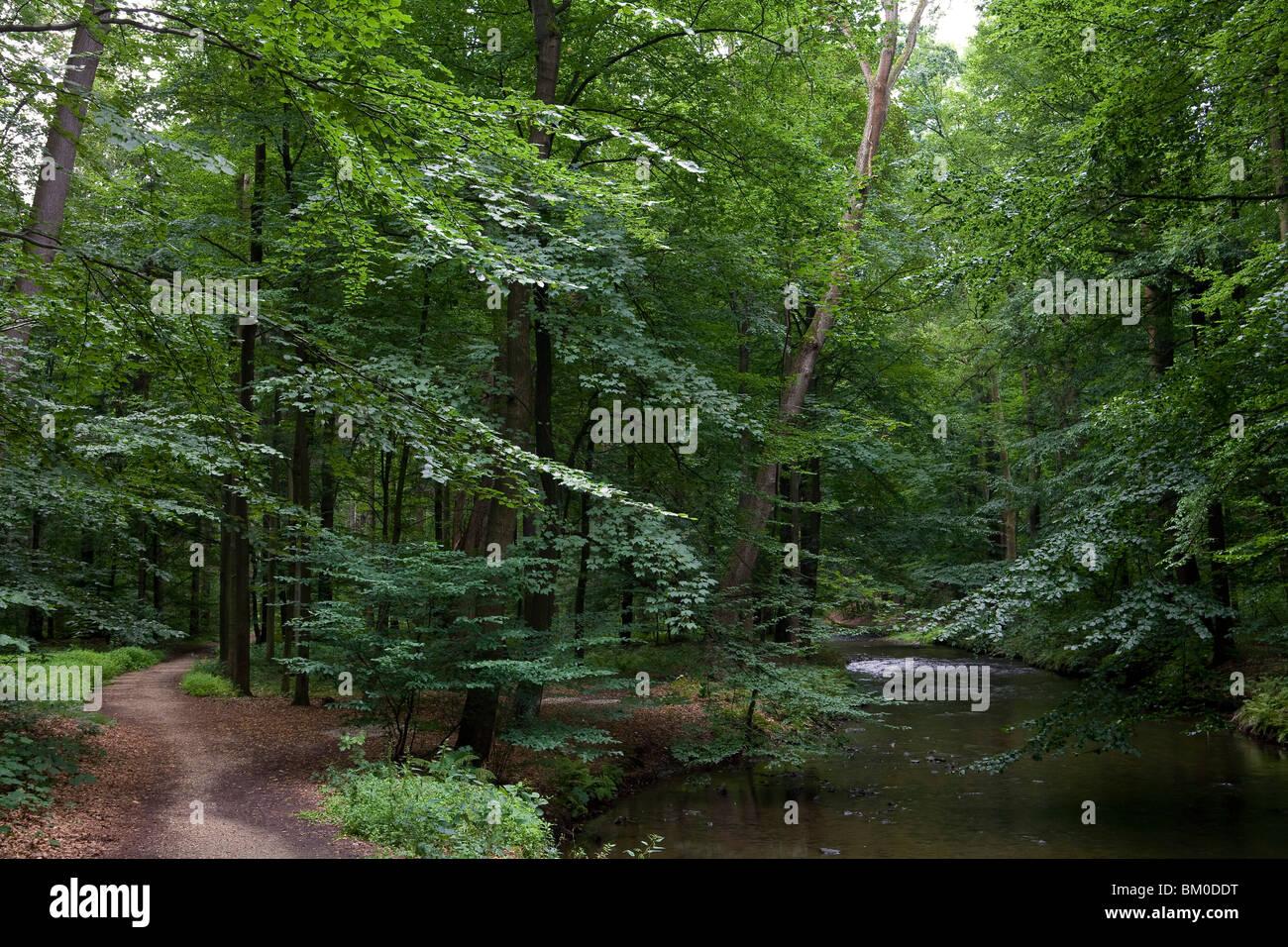 Landschaftsgarten im Seifersdorfer Tal, Wachau, Seifersdorf in der Nähe von Dresden, Sachsen, Deutschland, Stockbild