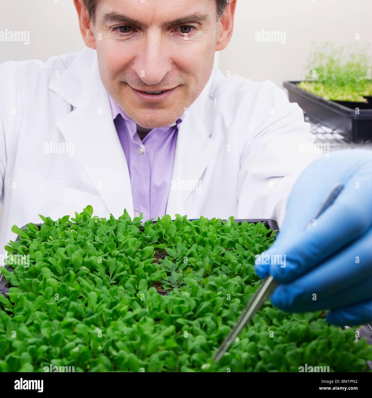 Wissenschaftler forschen auf Pflanzen in einem Labor Stockbild