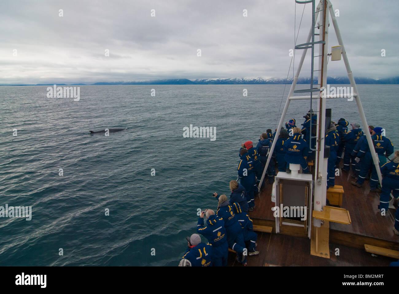 Trawler mit Touristen beobachten einen Wal, Husavik, Island, Polarregionen Stockbild
