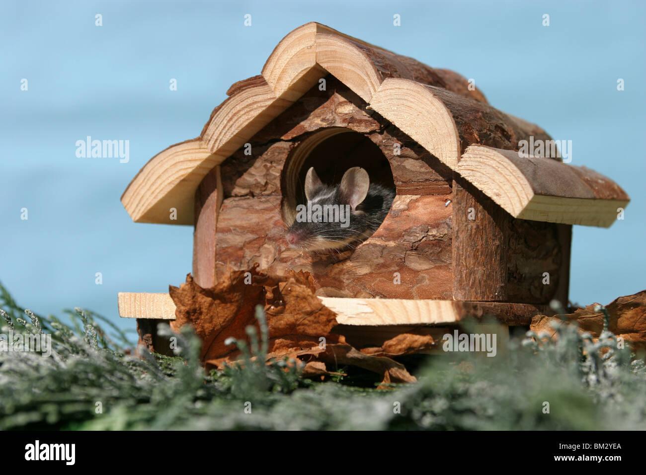Farbmaus Stockfotos & Farbmaus Bilder Alamy