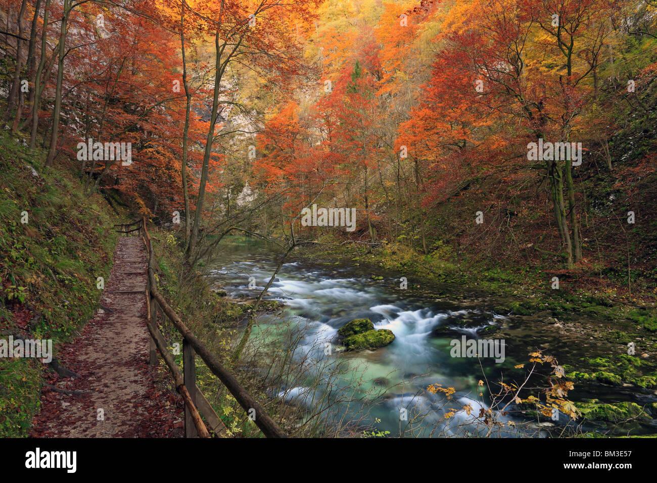 Blick vom Weg entlang Vintgar-Schlucht in der Nähe von Bled in Oberkrain. Slowenien Stockbild