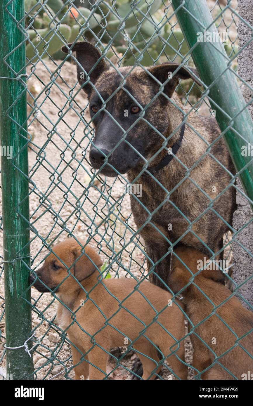 Dogs Behind A Fence Stockfotos & Dogs Behind A Fence Bilder - Alamy
