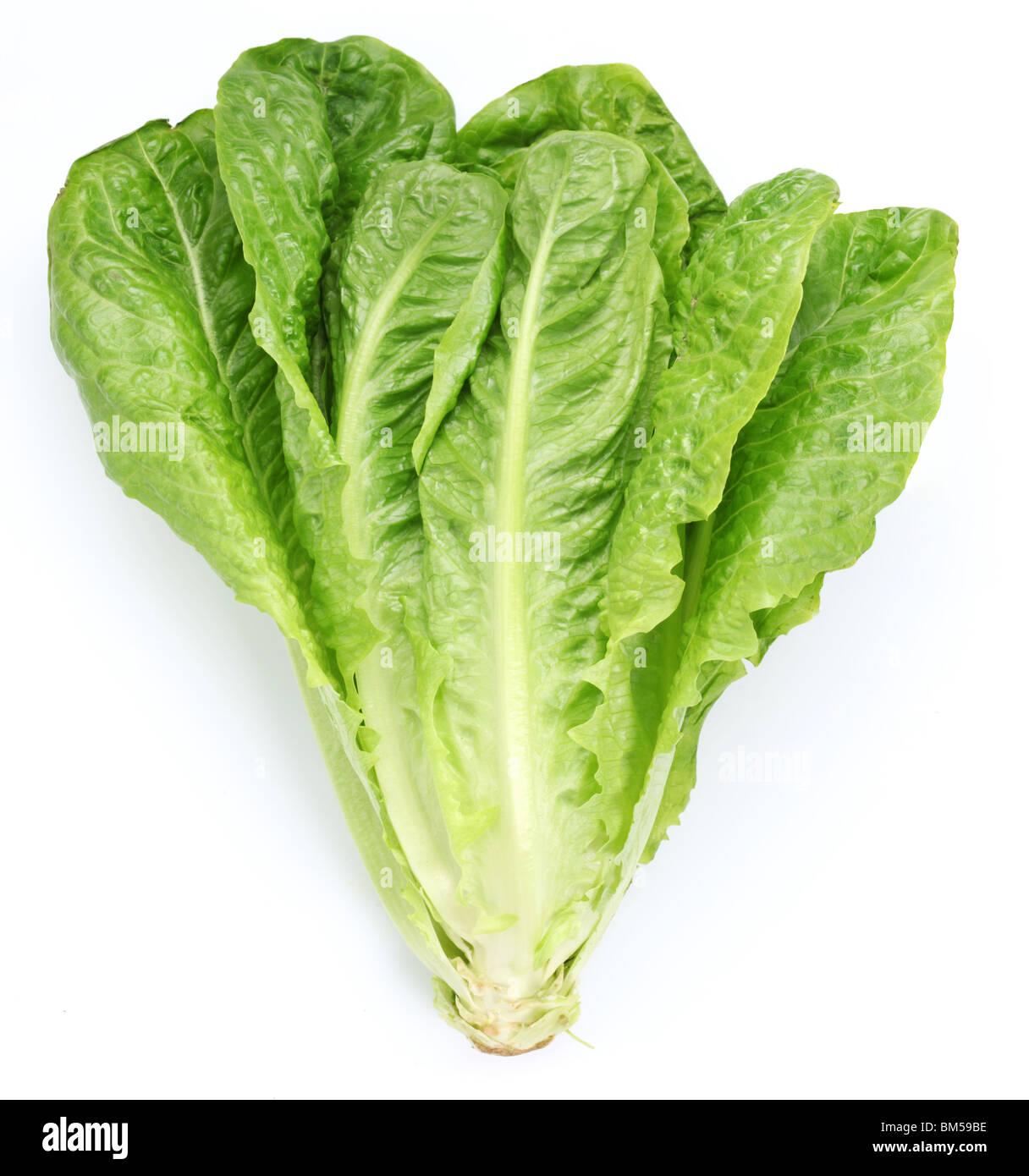 Salat auf einem weißen Hintergrund Stockbild