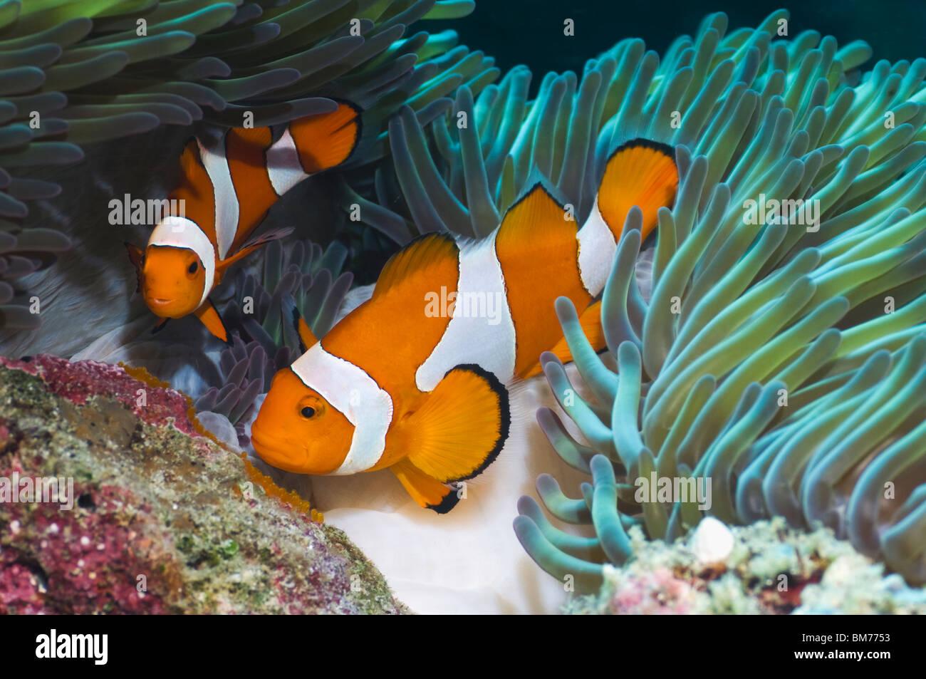 Fantastisch Fisch Färbung Seite Fotos - Beispielzusammenfassung ...