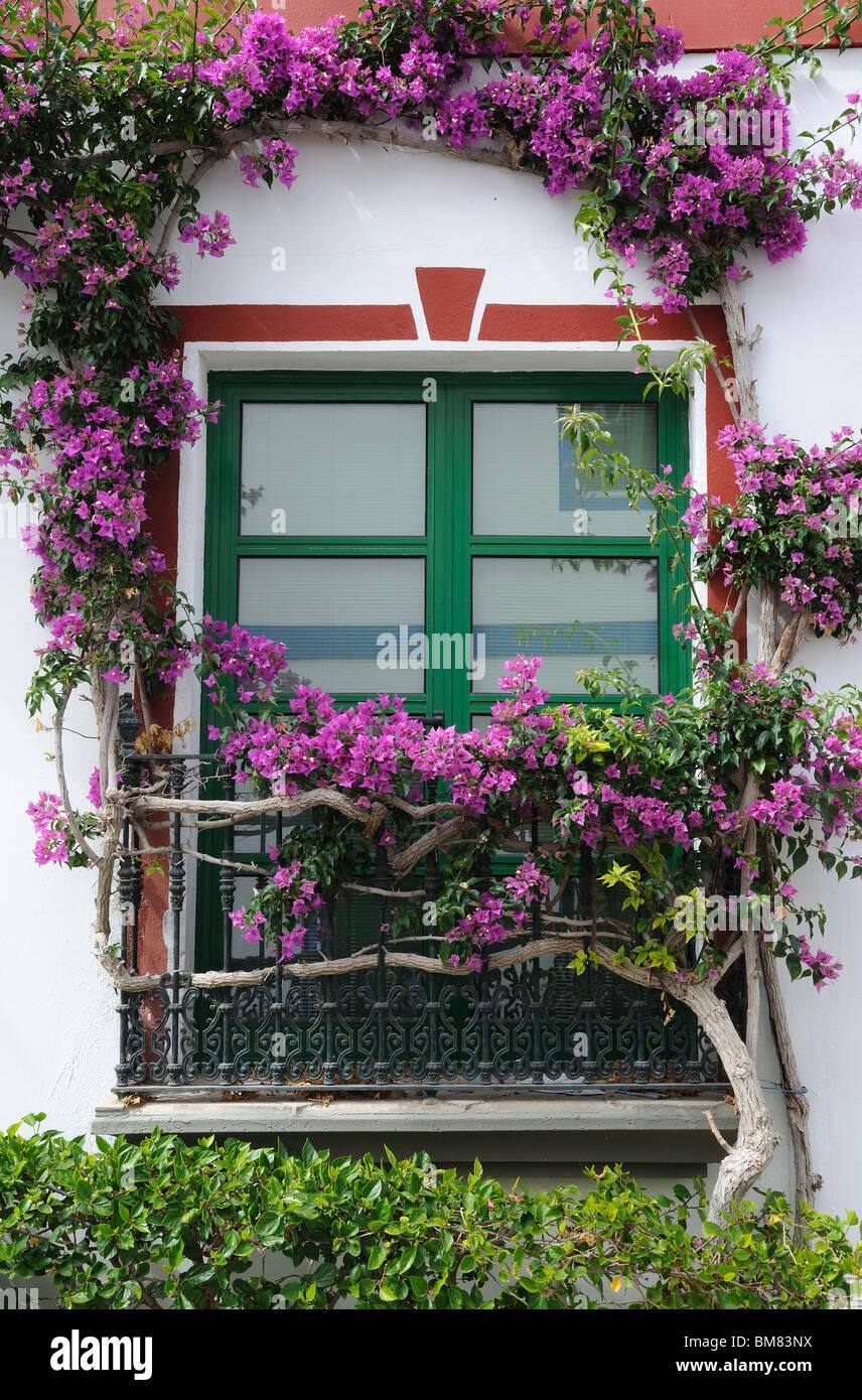 Gran Canaria Flowers Stockfotos & Gran Canaria Flowers Bilder - Alamy