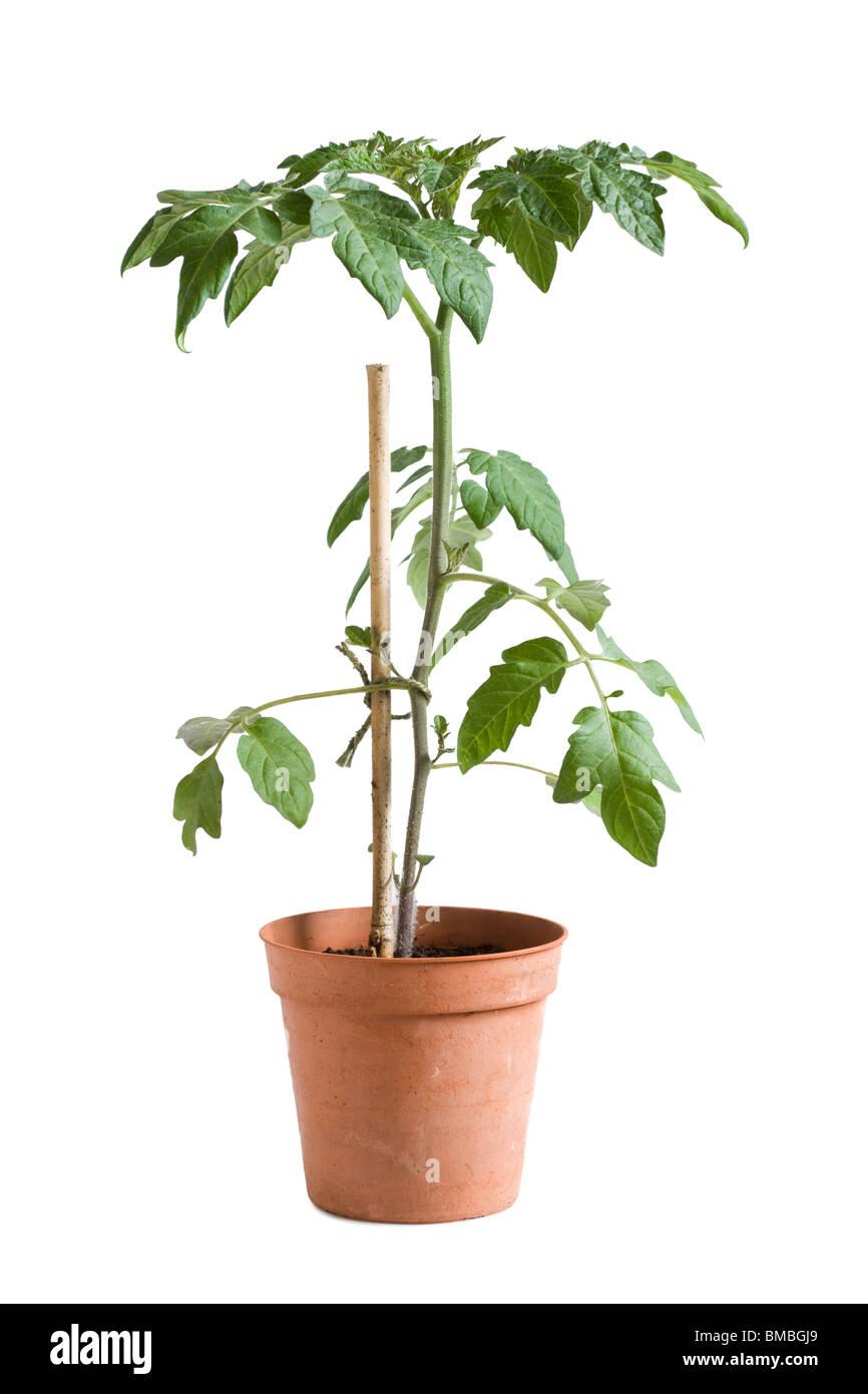 pot plant cut out stockfotos pot plant cut out bilder alamy. Black Bedroom Furniture Sets. Home Design Ideas