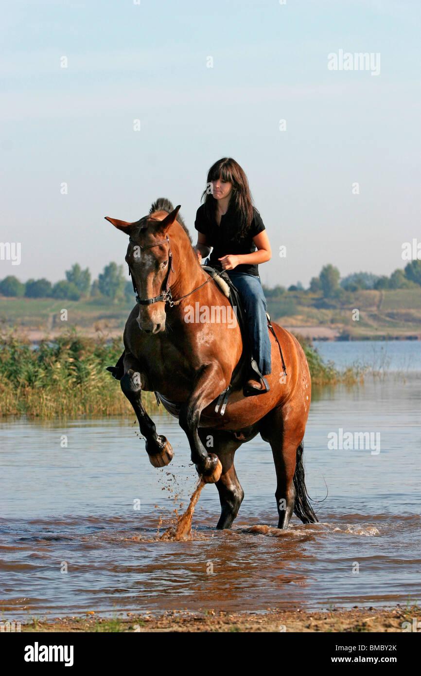 pferd steigt auf kommando aufzucht pferd stockfoto bild 29766203 alamy. Black Bedroom Furniture Sets. Home Design Ideas