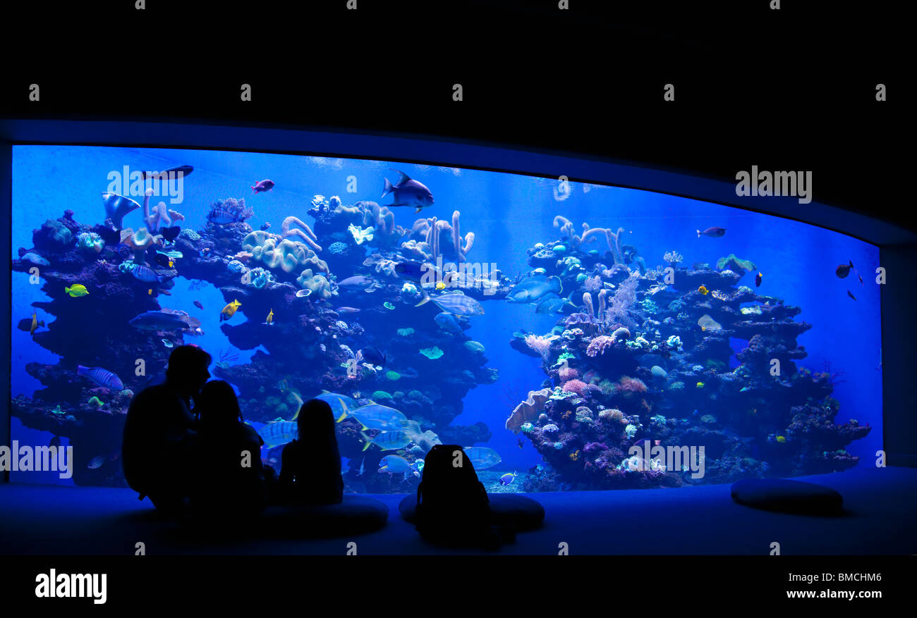 Aquarium sharks stockfotos aquarium sharks bilder alamy for Aquarium interieur