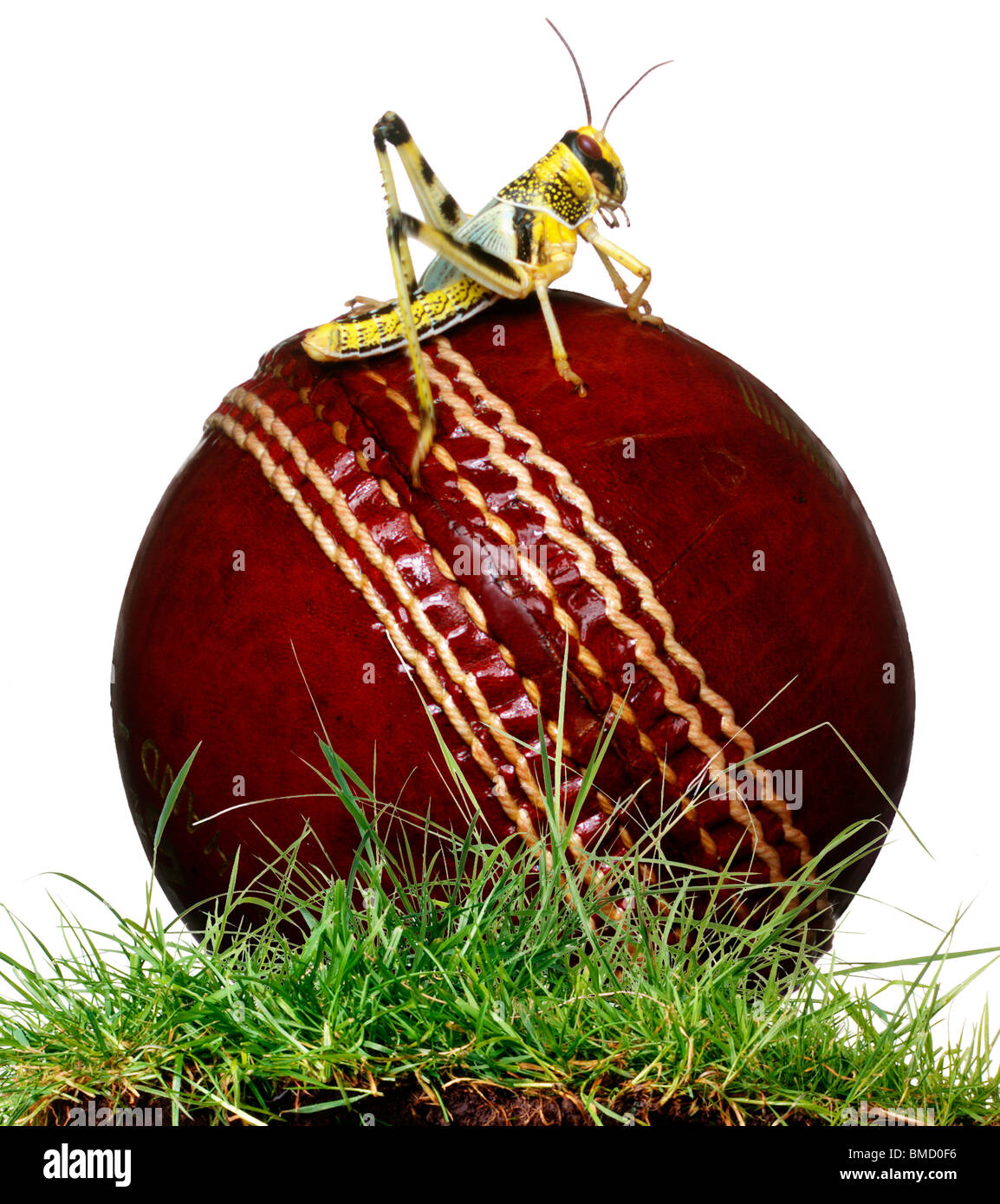 Cricketball Stockbild