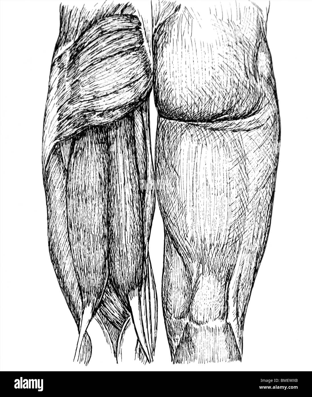 Gemütlich Muskeln Der Rückseite Des Halses Bilder - Menschliche ...