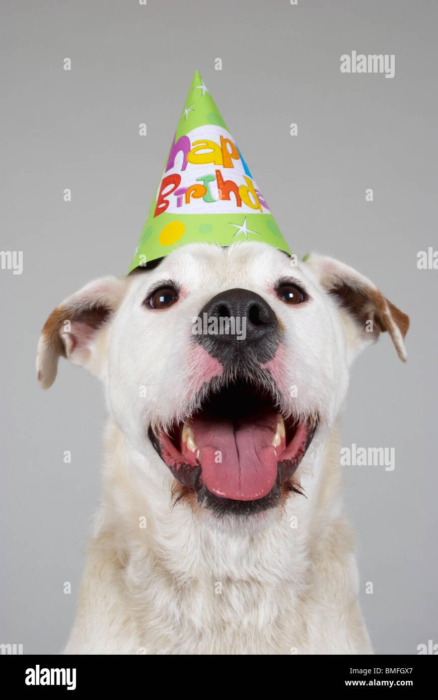Hund Einen Geburtstag Party Hut Stockfoto Bild 29846047 Alamy
