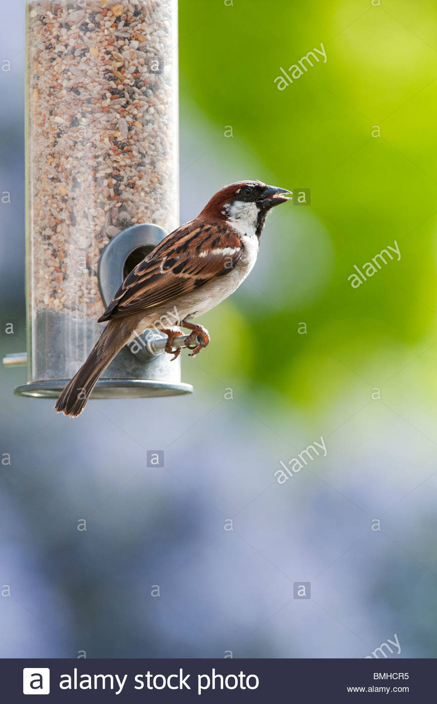 bird feeder stockfotos bird feeder bilder alamy. Black Bedroom Furniture Sets. Home Design Ideas