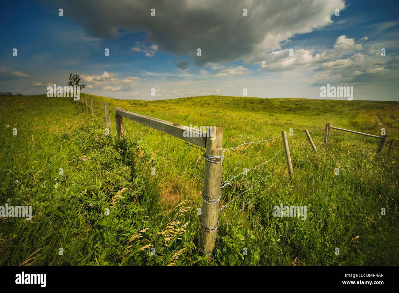 Morecambe, Alberta, Kanada; Ein Zaun In einem Feld Stockbild