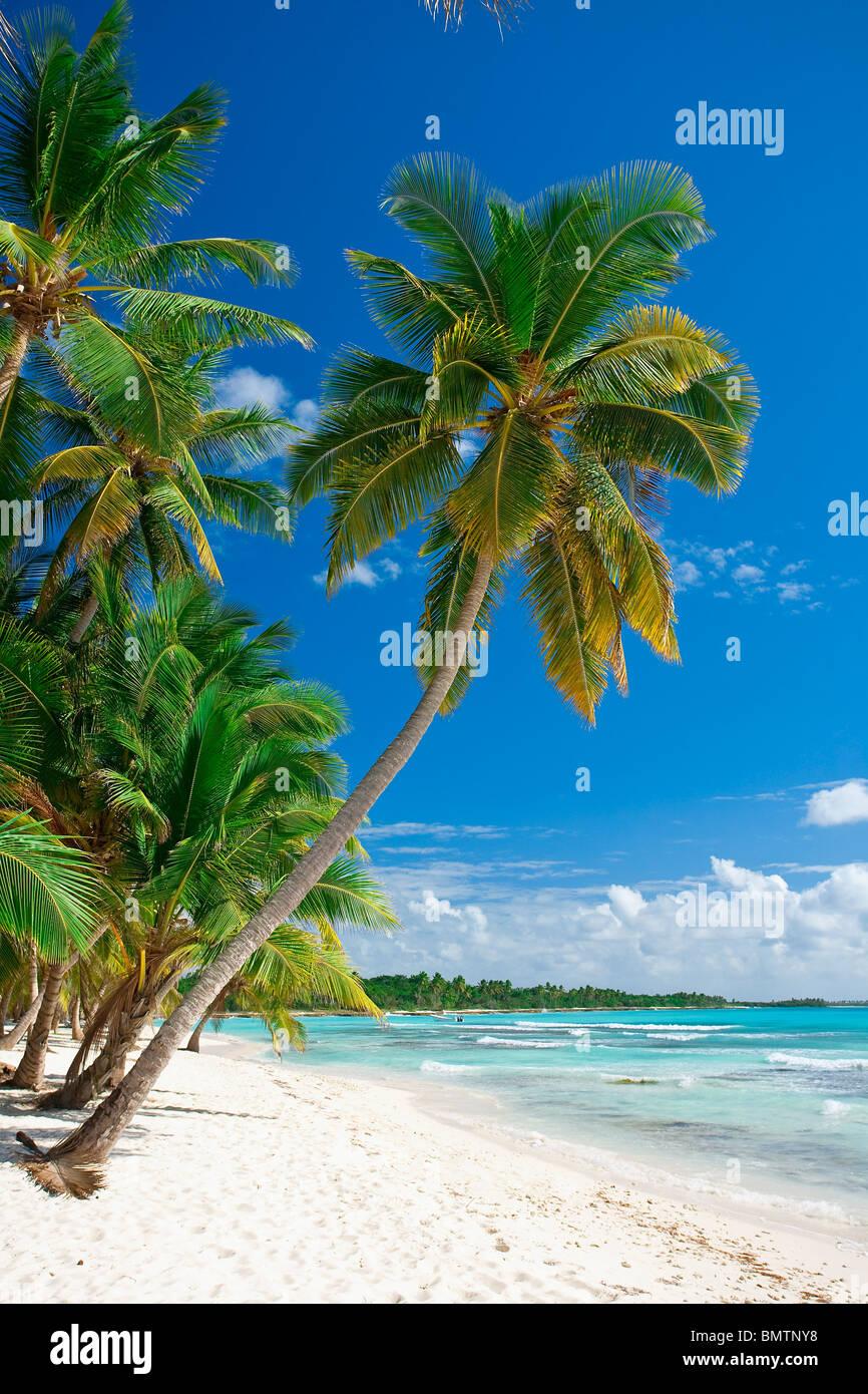 STRAND AUF ISLA SAONA PARQUE NATIONAL DEL ESTE DOMINIKANISCHE REPUBLIK KARIBIK Stockbild