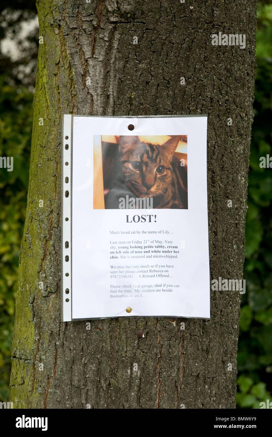 Fehlende Zeichen Baum für verlorene Katze befestigt London, England, UK Stockbild