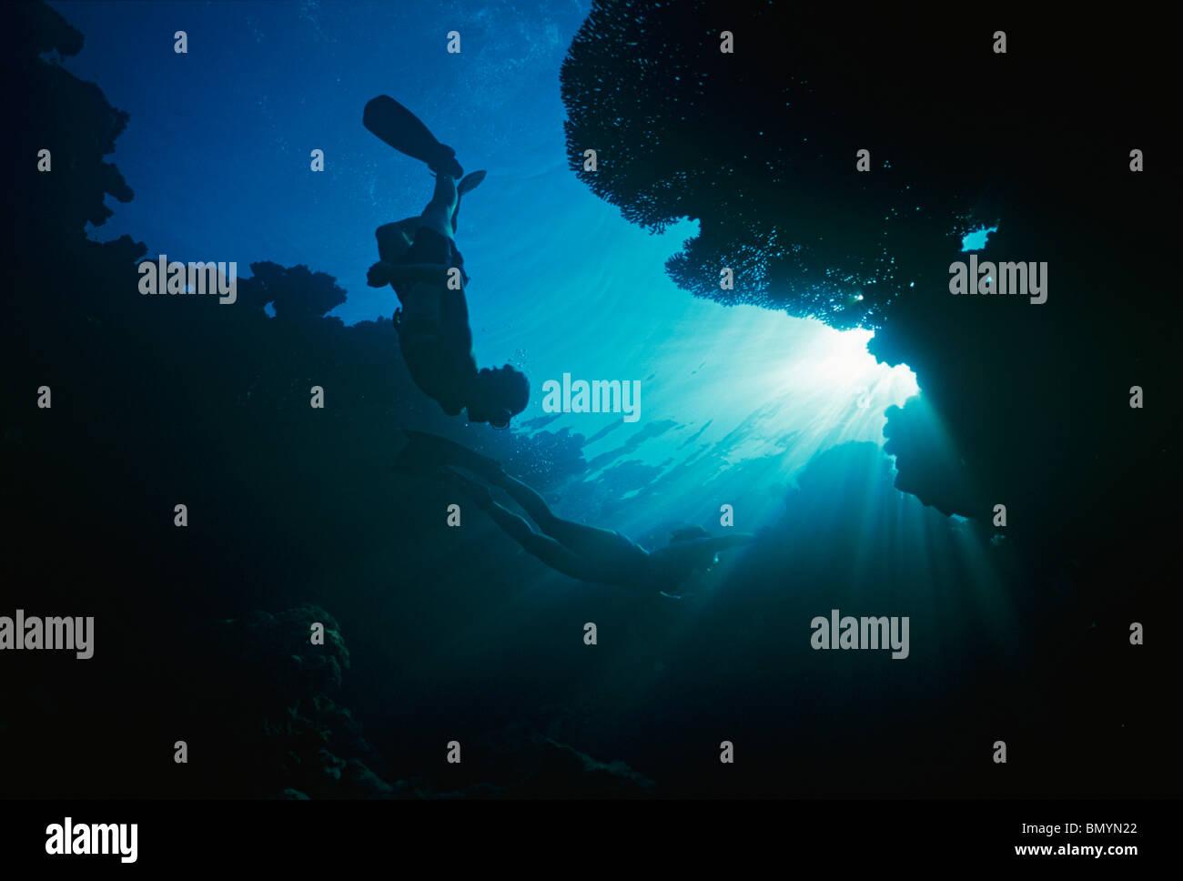 Freitauchen in Korallengarten - Insel Tiran, Rotes Meer, Ägypten Stockbild