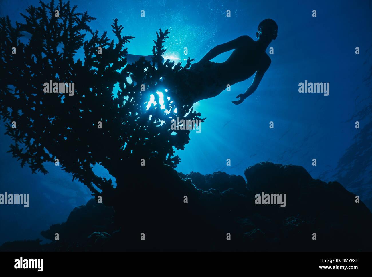 Freitauchen in Korallengarten. Tiran Insel; Ägypten, Rotes Meer Stockbild