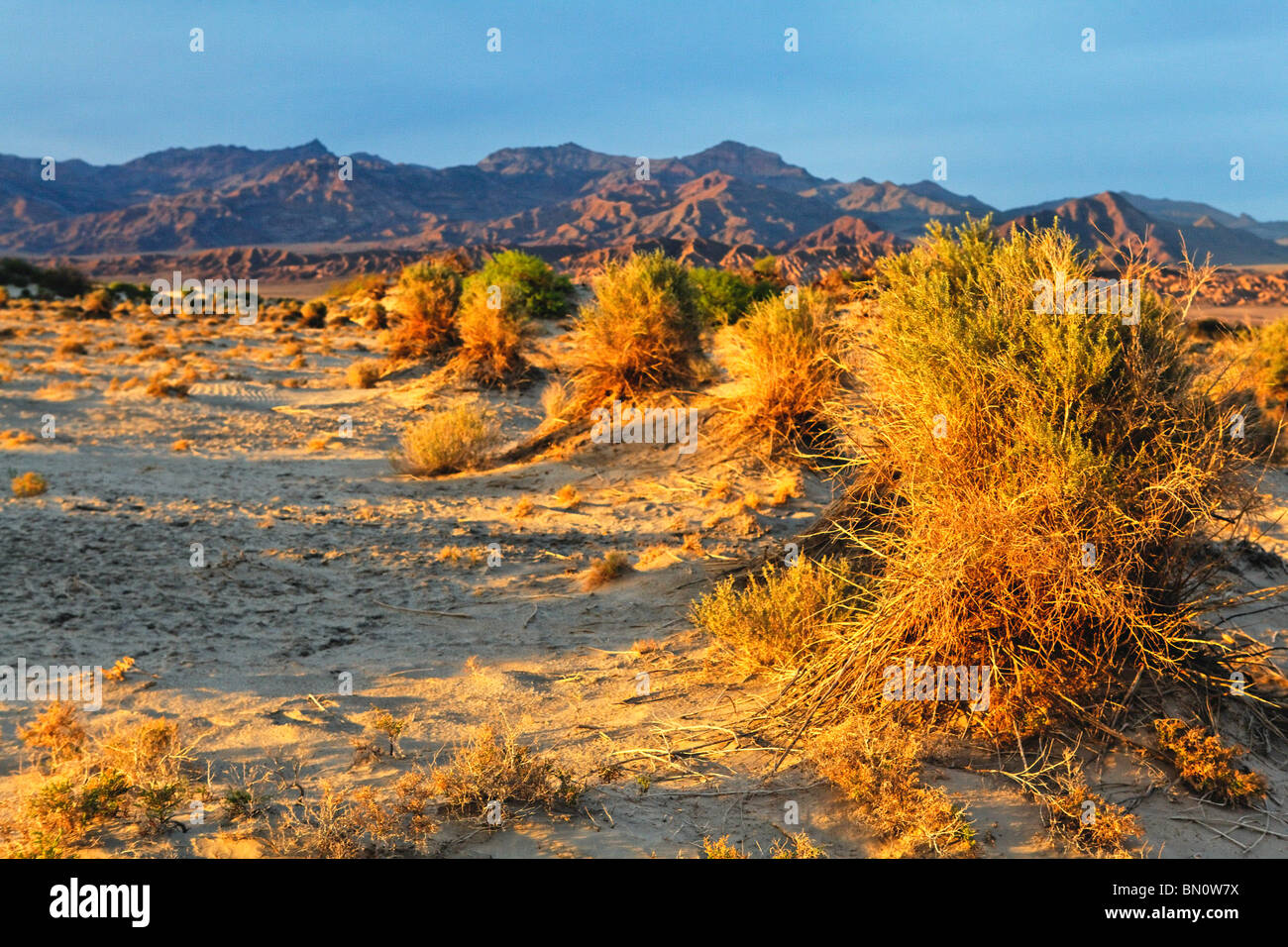 Sonnenuntergang am des Teufels Cornfield, Death Valley Nationalpark, Kalifornien Stockbild
