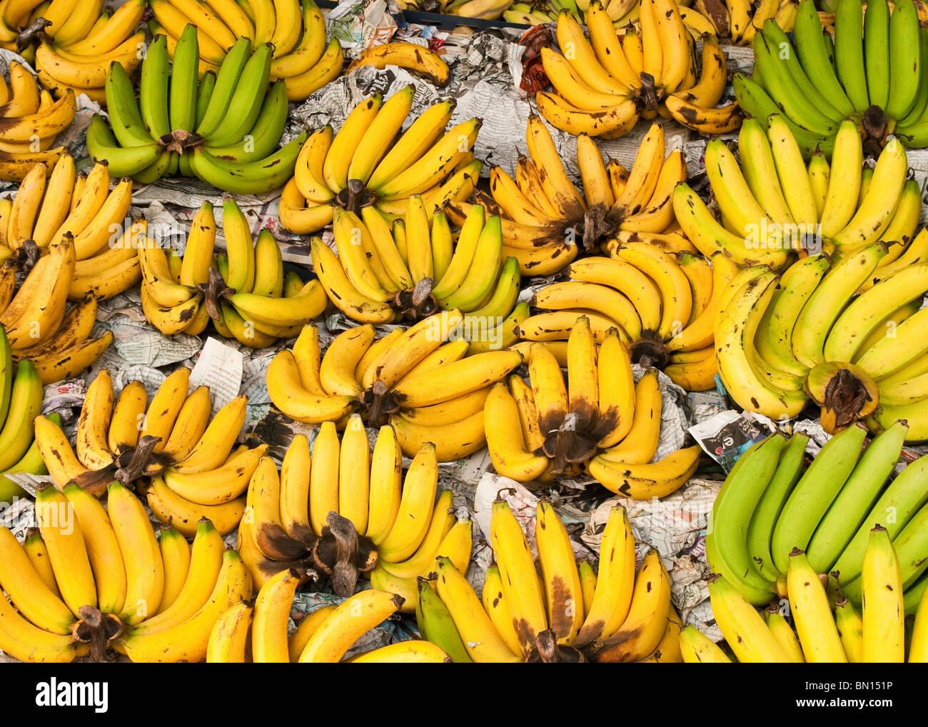 Bananen für Pratu Chiang Mai Markt; Chiang Mai, Thailand. Stockbild