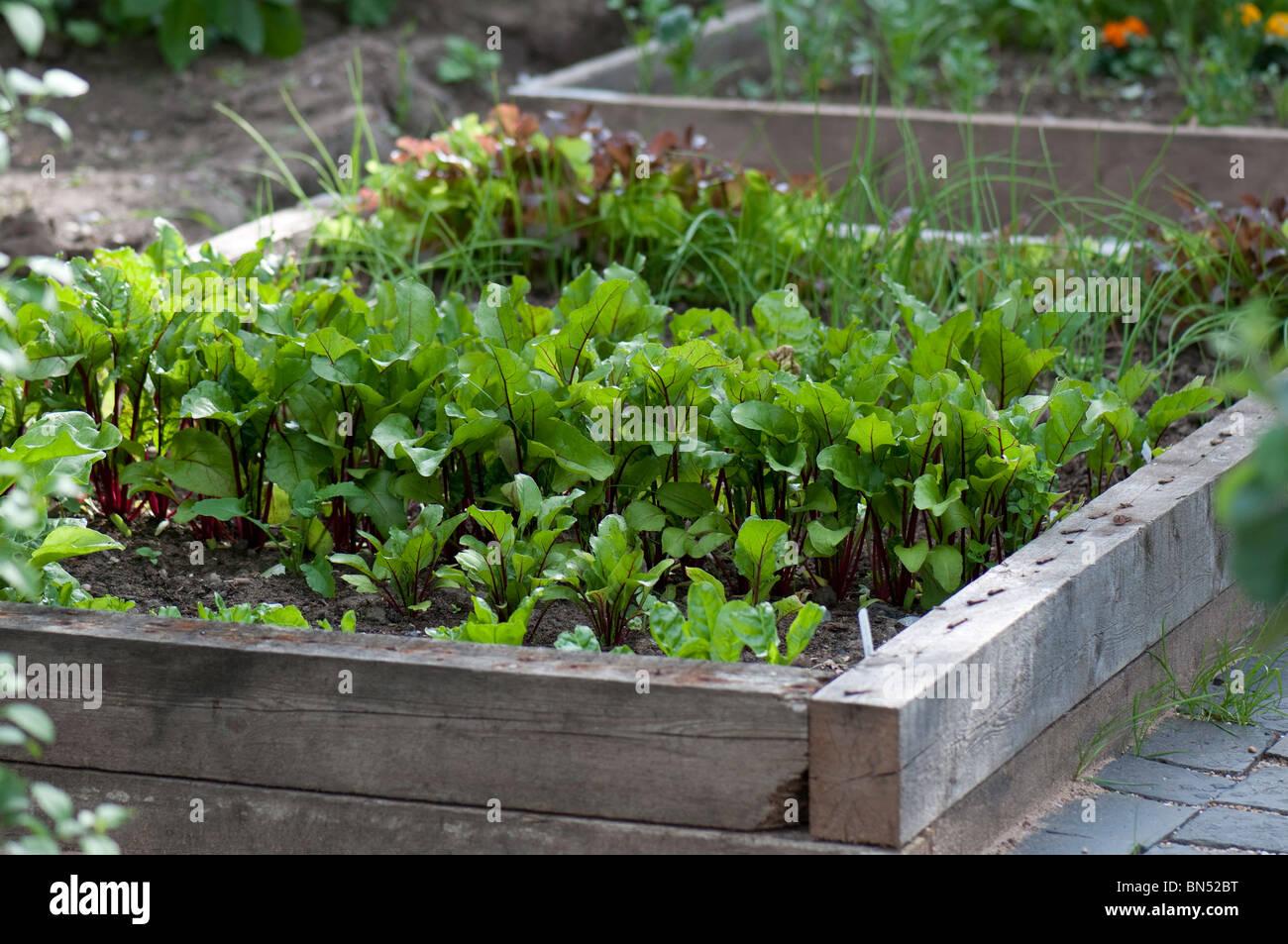Provisorische Hochbeet Zum Anbau Von Gemuse Stockfoto Bild