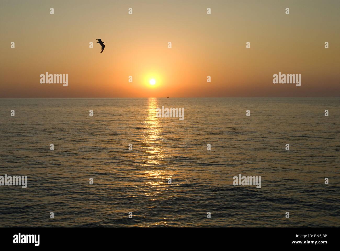 Sonnenuntergang mit Möwe, Bucht von San Antonio, Ibiza, Balearen, Spanien Stockbild