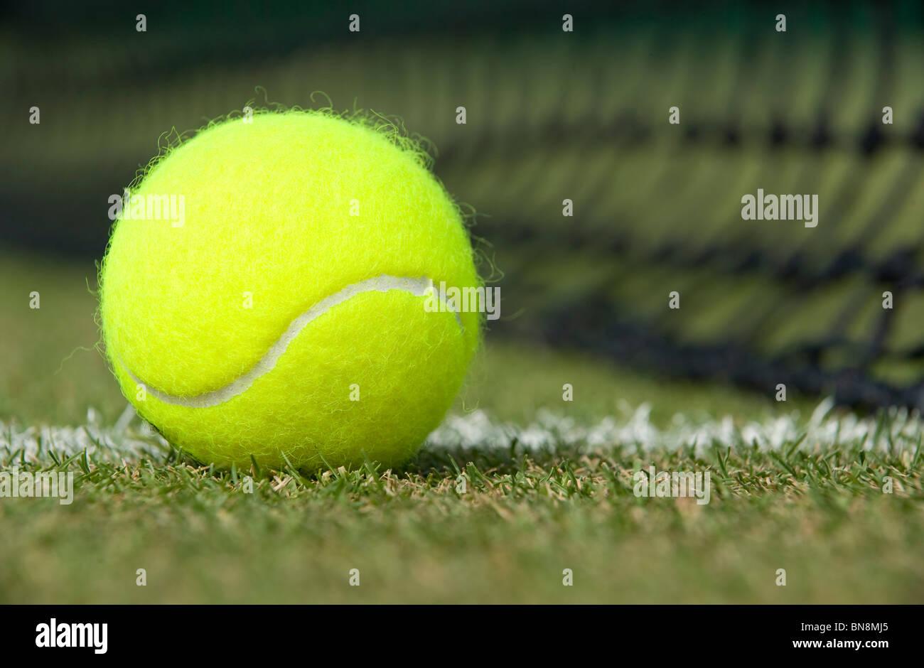 Ein Tennisball sitzt auf einem Rasenplatz Stockfoto