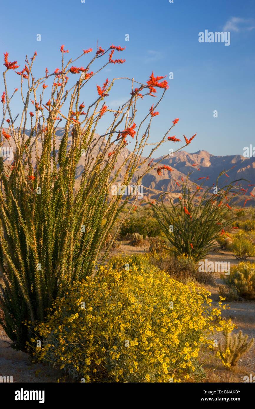 Anza-Borrego Desert State Park, Kalifornien. Stockbild