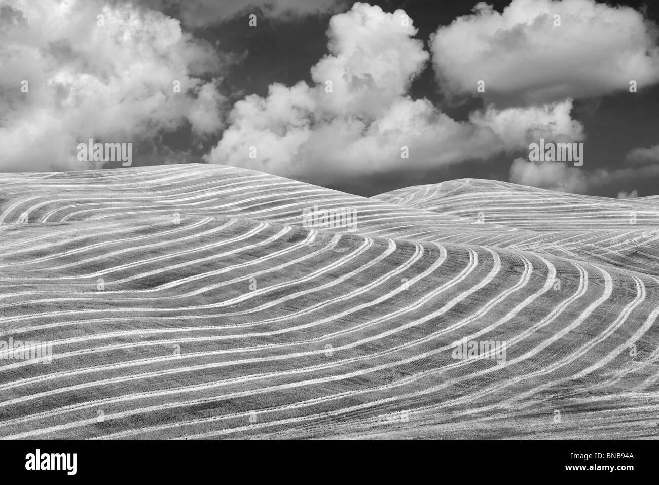 Abgeernteten Weizenfeld. Die Palouse, Washington. Ein Himmel wurde hinzugefügt. Stockfoto