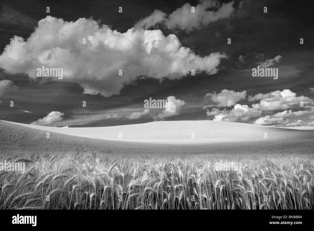 Wolken und Weizenfeld. Palouse, Washington Stockbild