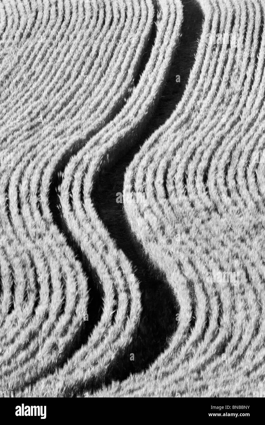 Linien Einpflanzen in Weizenfeld. Palouse, Washington Stockbild