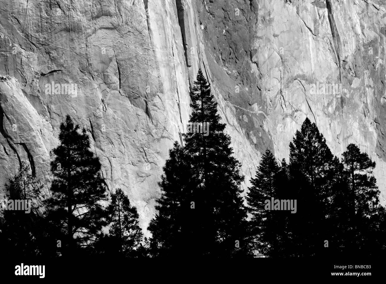 El Capitan mit Silhouette Bäume. Yosemite Nationalpark, Kalifornien Stockbild