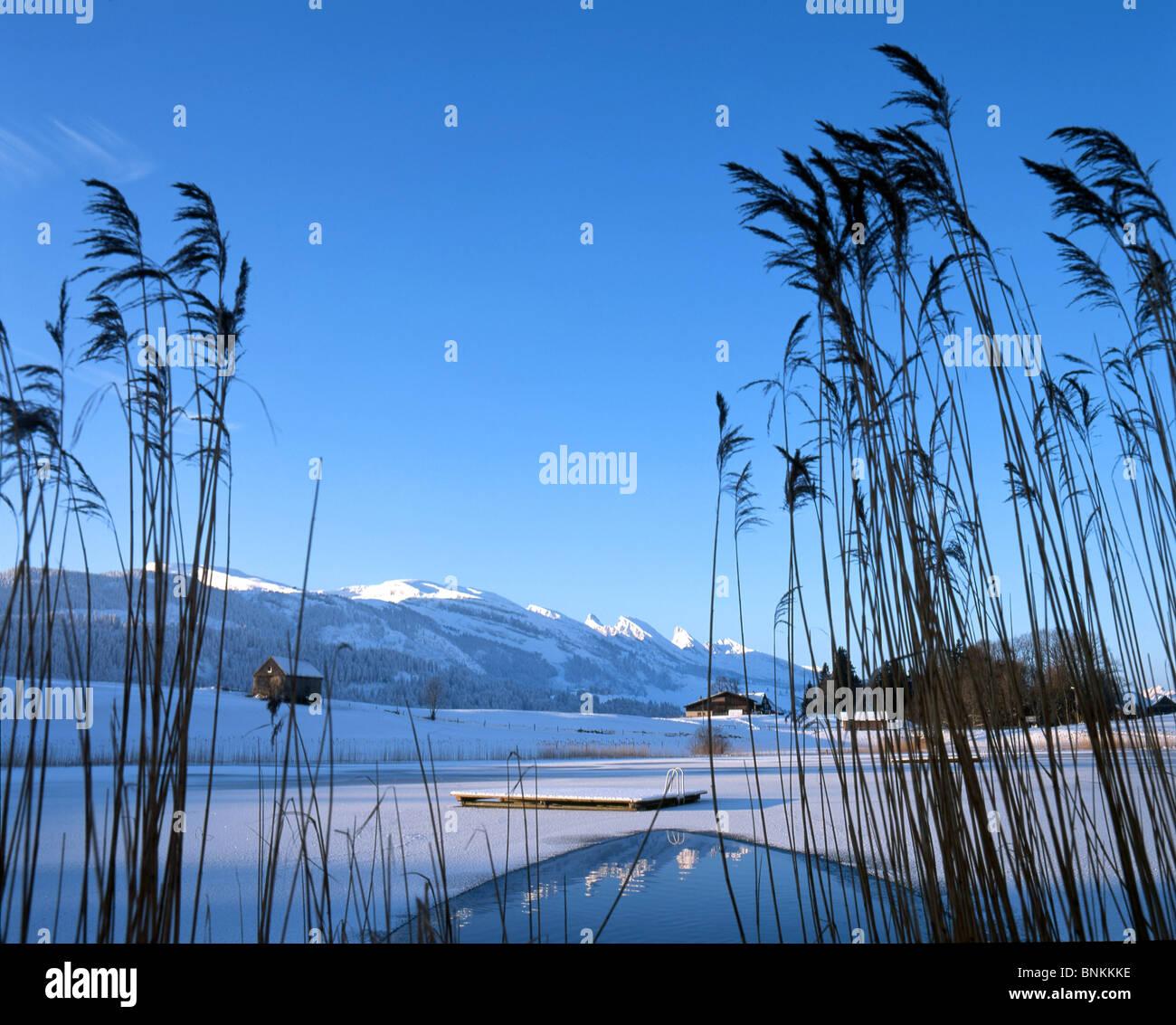 Schweiz Winter Landschaft Schnee Eis Abdeckung See Meer Teich Fror Iceboundly Reed Berge Kanton St Gallen Natur