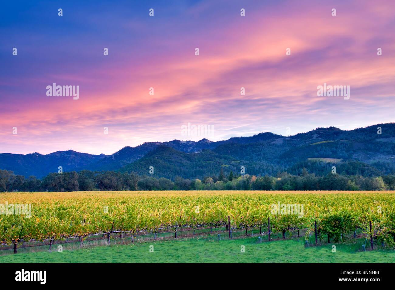 Sonnenaufgang über dem Napa Valley Weinberg mit Herbstfarben. California Stockfoto